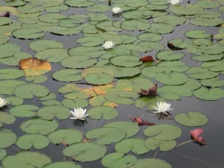 water-plant-iii