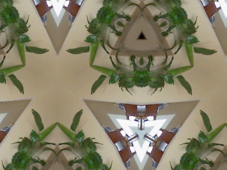 plant kaleidescope