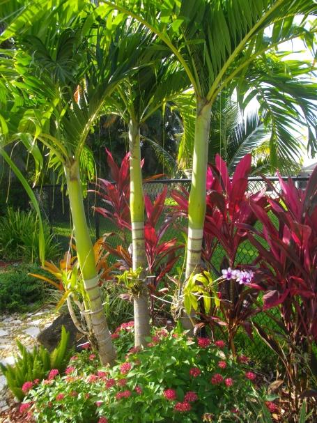 Tripple Christmas Palm